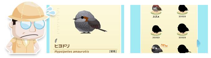 小鳥のデータを集めよう